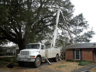 Tree Removal Jeanerette, New Iberia & Franklin LA